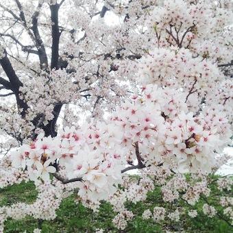 0402_お花見09.jpg