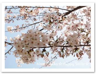 0410_お花見_01.jpg