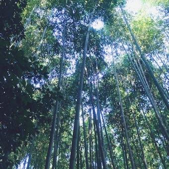 0910_嵐山01.JPG